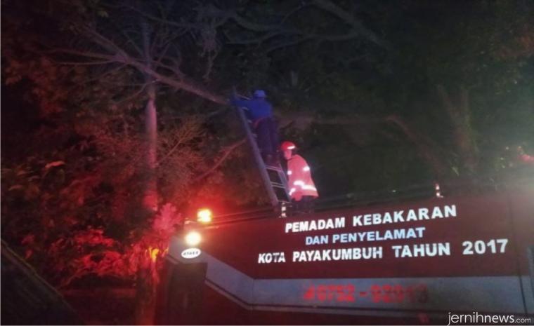Petugas Damkar Kota Payakumbuh membasmi tawon. DINAS KOMINFO PYK