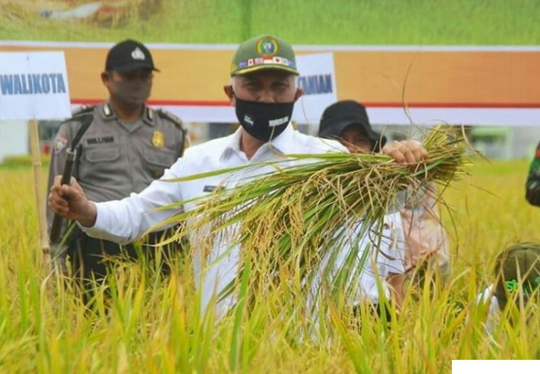 Walikota Padang (cuti) Mahyeldi yang kini menjadi Cagub Sumbar saat menghadiri panen padi di sawah masyarakat beberapa waktu lalu. Selaku alumni Fakultas Pertanian Unand, Mahyeldi memiliki program pembangunan yang senantiasa berpihak kepada petani.  NET