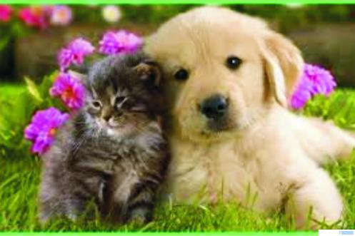 Kucing dan anjing. NET