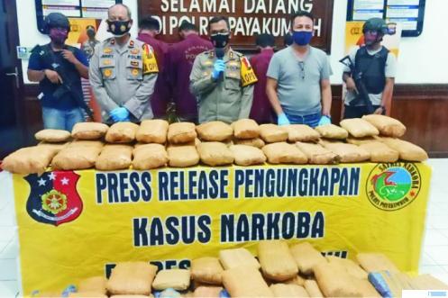 Polres Payakumbuh merilis empat pelaku kejahatan narkoba dengan barang bukti 100 kg ganja yang akan diedarkan di Kota Payakumbuh, Selasa (06/10/2020). TNS