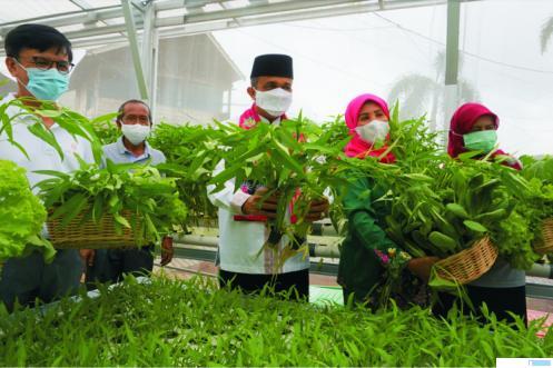 Perumda Pembangunan Sarana Jaya sebagai BUMD Provinsi DKI Jakarta terus membantu berbagai kesulitan yang dialami warga ibukota dalam menghadapi pandemi.  dengan membuat Urban Farming di Nuansa Pondok Kelapa, Jakarta Timur dengan tujuan untuk membantu warga masyarakat sekitar yang membutuhkan. IST