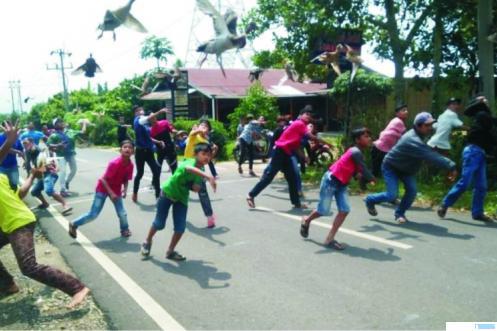 Kegiatan Pacu Itiak, permainan anak nagari Kota Payakumbuh yang ditetapkan sebagai warisan budaya Indonesia. NET